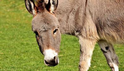 牛皮癣可以吃驴肉吗
